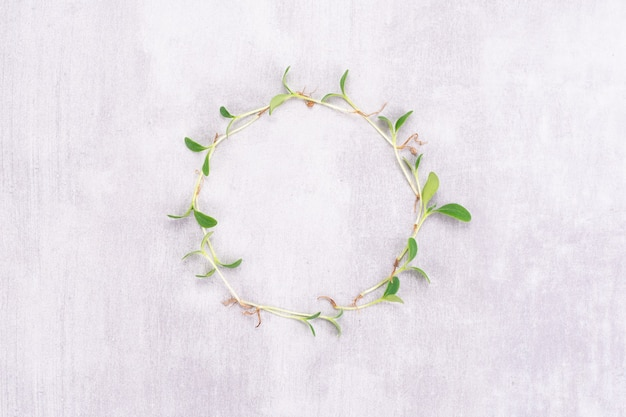 Conceptual photo of microgreens of watercress on a white background in the form of a clock. microgreen circle with place for text. vegan and healthy food concept.