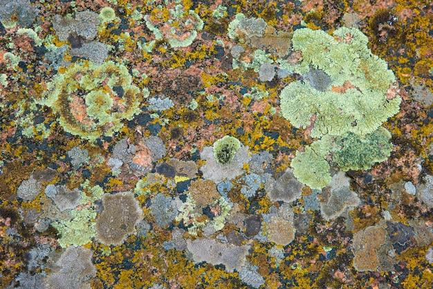 背景テクスチャとして真菌で覆われたコンクリートの破片