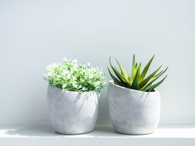 コンクリートポット。白い花と緑の多肉植物のモダンな幾何学的なセメントプランター
