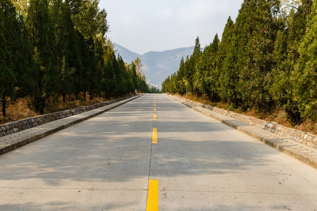 Concrete road with a yellow marking line through a forest in the mountains