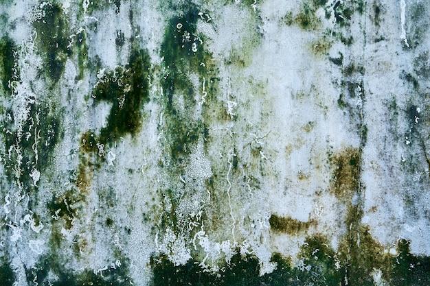녹색 곰팡이 얼룩이 있는 콘크리트 벽 텍스처