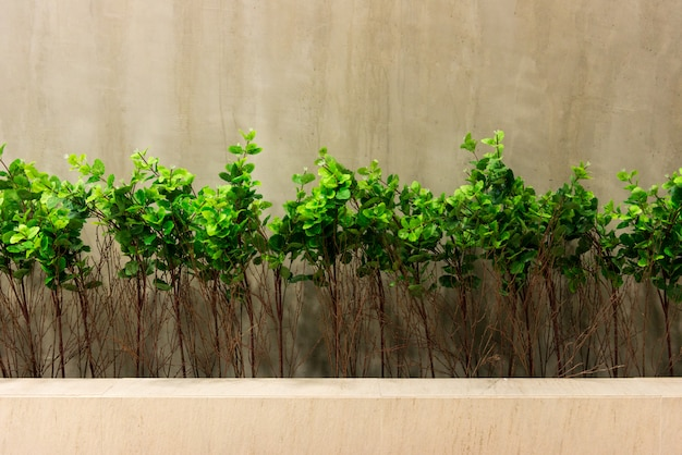 Concrete wall with green leaves