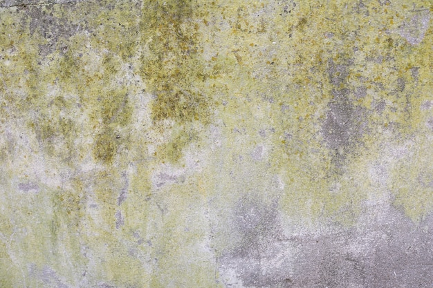 Concrete wall with moss and dirt