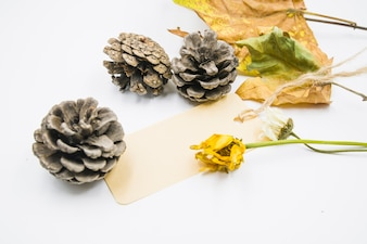 Cones with dried flowers