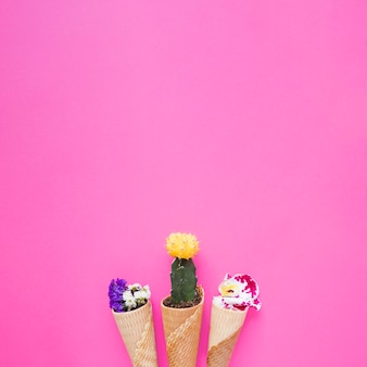Конусы с цветами и кактусом