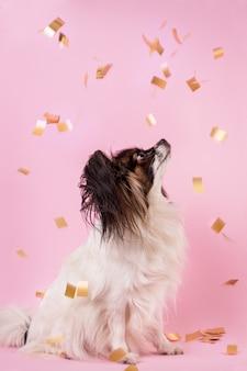 Конфетти падает на собаку