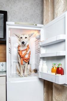 부엌에 있는 냉장고에서 소시지를 훔치는 자신감 있는 개. 소시지 우유에 표시
