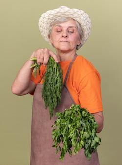 Confident elderly female gardener wearing gardening hat holding bunch of coriander and dill