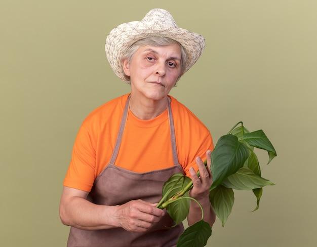 Fiducioso giardiniere donna anziana che indossa cappello da giardinaggio che tiene ramo di piante plant