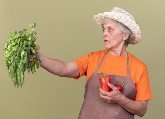 Fiducioso donna anziana giardiniere che indossa cappello da giardinaggio tenendo peperoni rossi e mazzetto di coriandolo guardando a lato