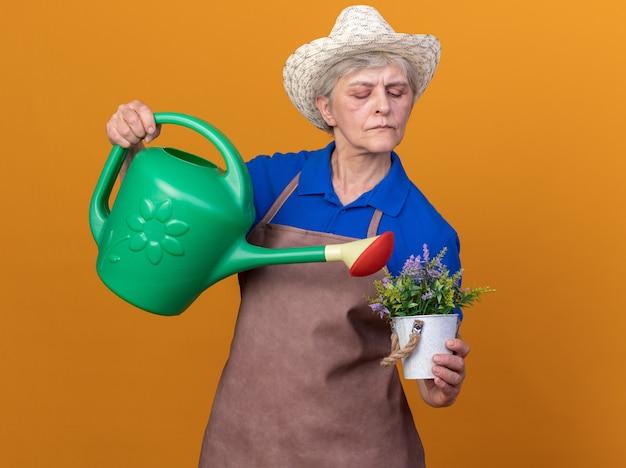 Fiducioso giardiniere femmina anziana che indossa cappello da giardinaggio innaffiando fiori in vaso con annaffiatoio