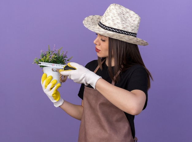 Giardiniere femminile abbastanza caucasico fiducioso che indossa cappello e guanti da giardinaggio che misurano fiori in vaso di fiori con metro a nastro isolato sulla parete viola con spazio di copia
