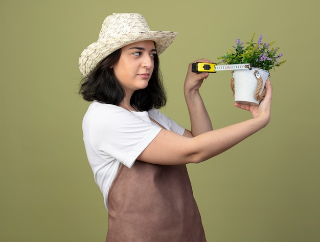 올리브 녹색 벽에 절연 테이프 측정 화분을 측정하는 원예 모자를 입고 제복을 입은 자신감이 젊은 갈색 머리 여성 정원사