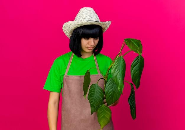 ガーデニング帽子をかぶって制服を着た自信を持って若い女性の庭師は、植物を保持し、見ています