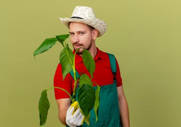 コピースペースとオリーブグリーンの壁に分離された植物を保持している庭師の手袋を身に着けている制服と帽子の自信を持って若いハンサムなスラブ庭師