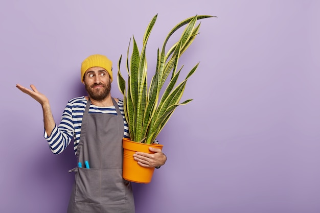 Confused young man florist grows house plant, raises palms with hesitation, thinks how to fertilize sansevieria