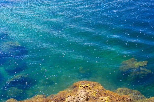 혼잡 바다 석호에 떠 다니는 수백만 마리의 해파리