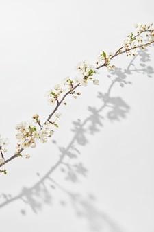 やわらかい咲く桜の枝からのお祝いポストカード