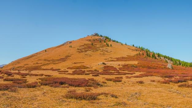 円錐形の秋の斜面。真っ赤な秋の山の斜面。日光の下で森の丘と鮮やかな葉の風景。アルタイ山脈のあるミニマルな風景。