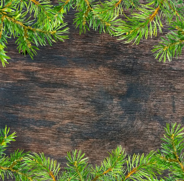 Conifer tree branches frame. christmas card background