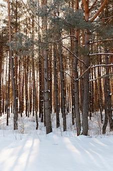 冬には葉のない針葉樹と落葉樹、降雪と吹雪の後に雪に覆われた木