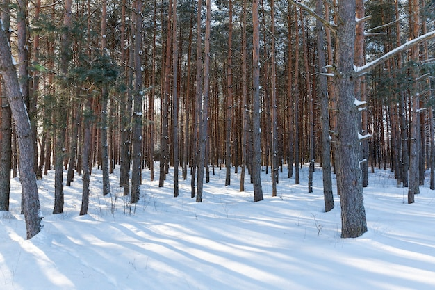 Хвойные и лиственные деревья без листвы зимой