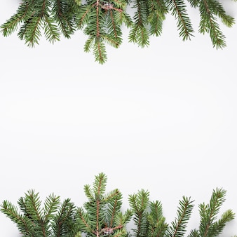 Coniferous branches on light desk
