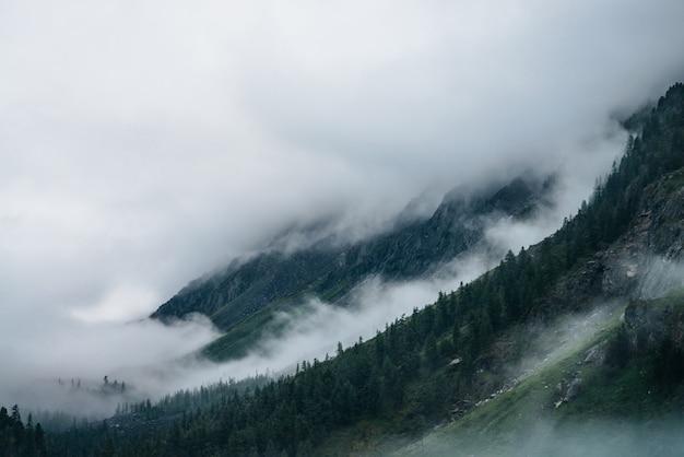 低い雲の中の山腹の針葉樹林。濃霧の中の針葉樹のあるロッキー山脈の大気の眺め。大きな岩の上の幽霊のような霧の森。早朝のシンプルなドラマチックな風景