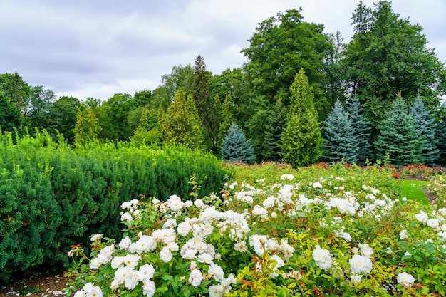 Coniferous forest with white flowers in the foreground and cloudy sky.