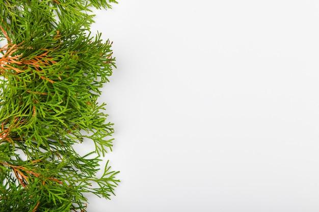 Хвойные зеленые ветви на белом пространстве. вид сверху. место для письма. рождественское пространство.