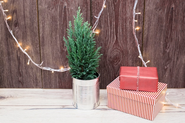 Coniferous plant in tin near present boxes in wraps near fairy lights