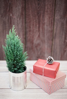 Coniferous plant in tin near present boxes in wraps