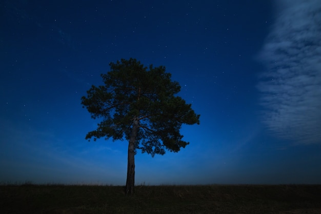 Coniferous tree on a background of the night star sky. the landscape is photographed by moonlight.