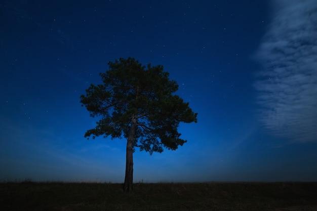 Хвойное дерево на фоне ночного звездного неба. пейзаж сфотографирован при лунном свете.