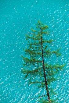 Хвойное дерево на блестящей поверхности лазурного горного озера. дерево лиственницы на чистой воде в солнечном дне. минимализм с копией пространства.