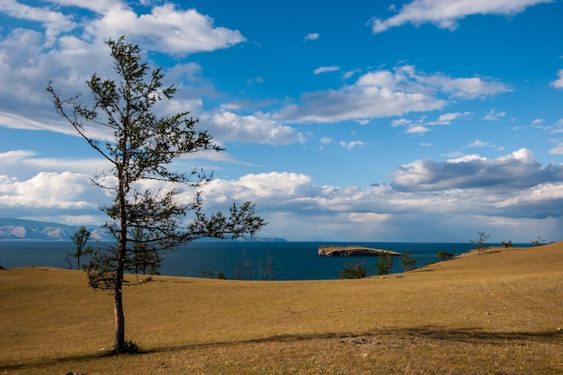 Хвойное дерево на берегу озера с облаками на голубом небе