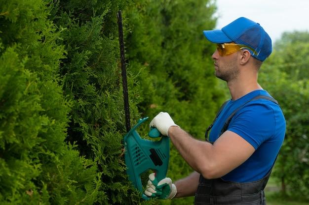 Хвойные деревья обрезаются электрическим кусторезом по форме, по которой мужчина стригет тую ...