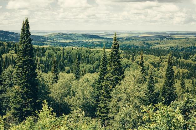 緑の森と山の背景に針葉樹が生えています。曇り空の下の緑の風景。