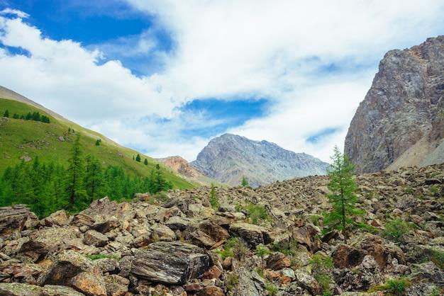 Хвойные деревья в горной местности. лиственница на каменистом холме. чудесные гигантские скалистые горы. горный хребет. огромные камни. горная флора. хвойный лес. удивительный яркий зеленый пейзаж величественной природы.