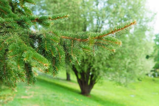 자연 배경 디자인의 공원에 있는 침엽수