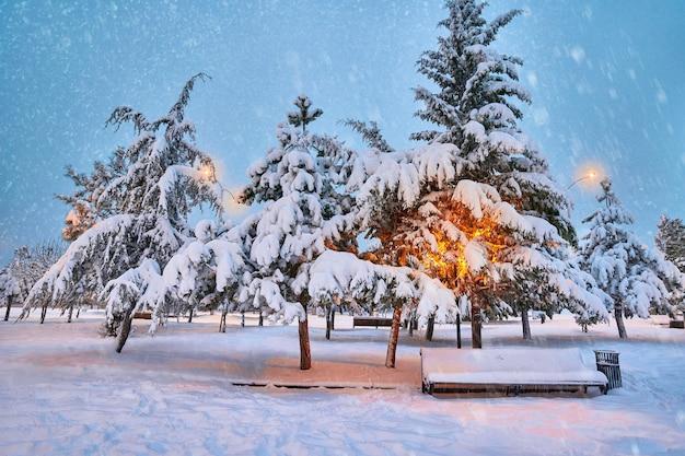 雪に覆われた針葉樹、ランタン、木製ベンチ