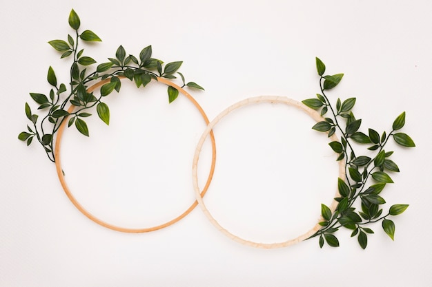 Connected wooden circular frames with green leaves on white background