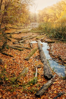 Consequences of deforestation around river in autumn color