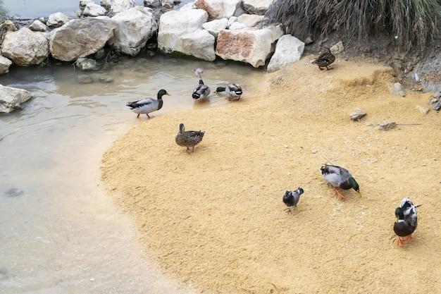 자연 환경이 사라지면서 물새의 보전