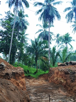 Construction in the jungle forest. workers are digging a large foundation pit.