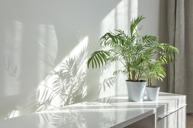 机の光沢のある表面、植木鉢の自然な緑の観葉植物、晴れた日の壁の窓からの長い影のある現代的なエコインテリアコーナー、コピースペース。エコ作業場。
