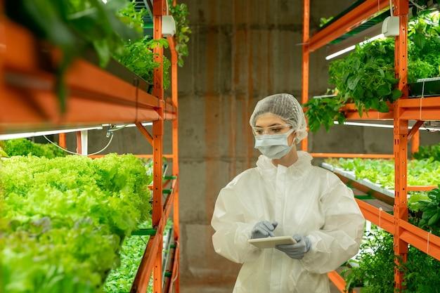 녹색 묘목을 보면서 태블릿을 사용하여 보호 작업복, 마스크, 장갑, 안경 및 모자를 쓴 현대 온실 작업자