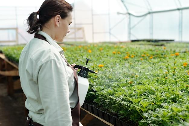 개화 꽃을 뿌리는 현대 온실 작업자