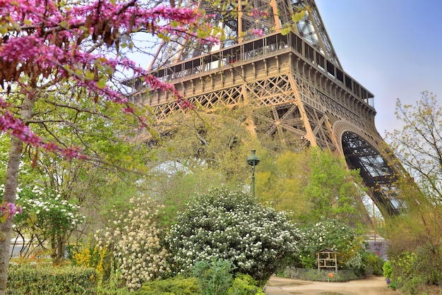 Contrast with the tree in springtime and iron eiffel tower background