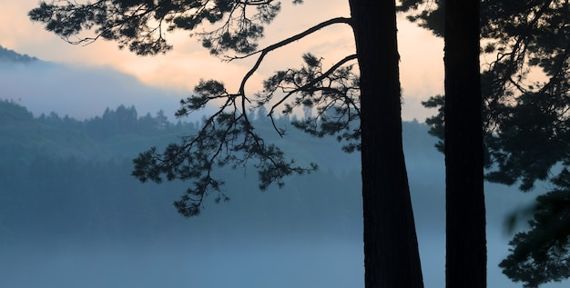 空と山々を背景に対照的な朝の木の眺め